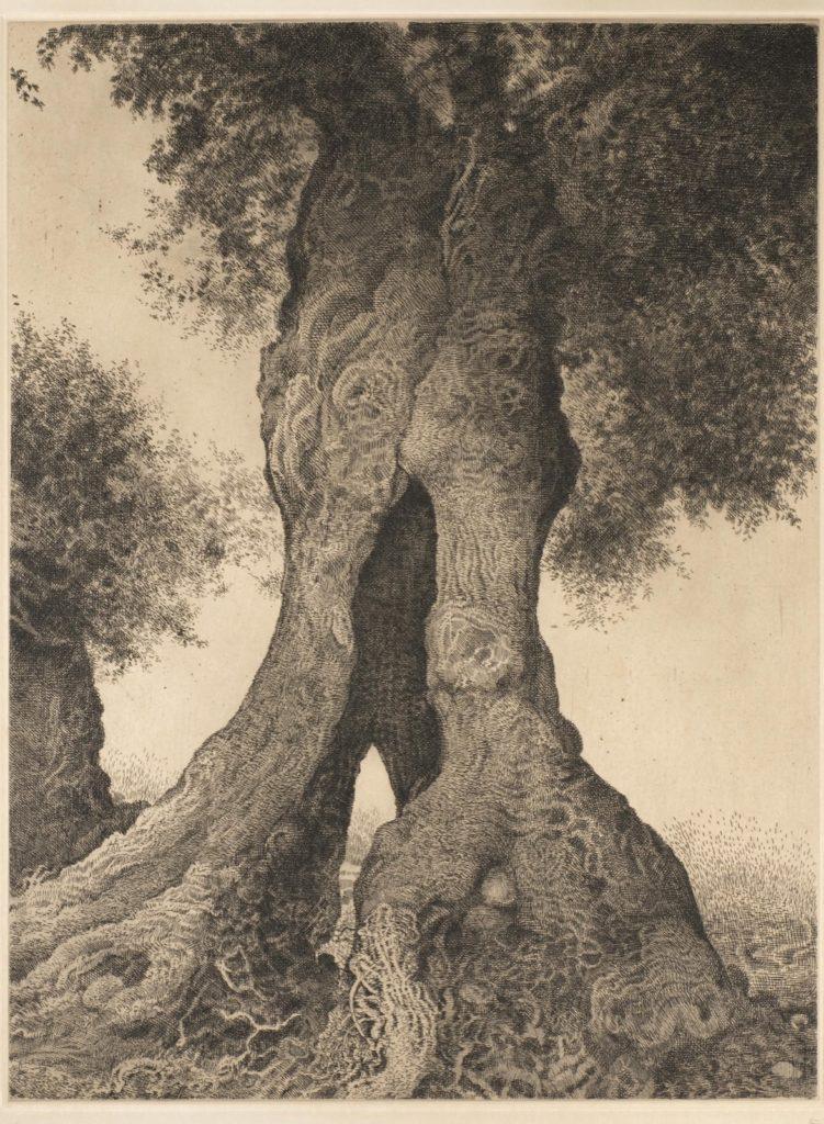Anamorfosis del Olivo