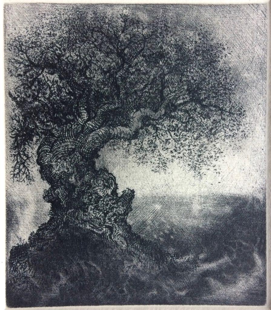 Pequeño bonsai - estado VI
